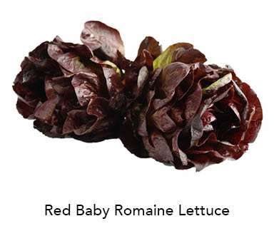 Baby Red Romaine Lettuce